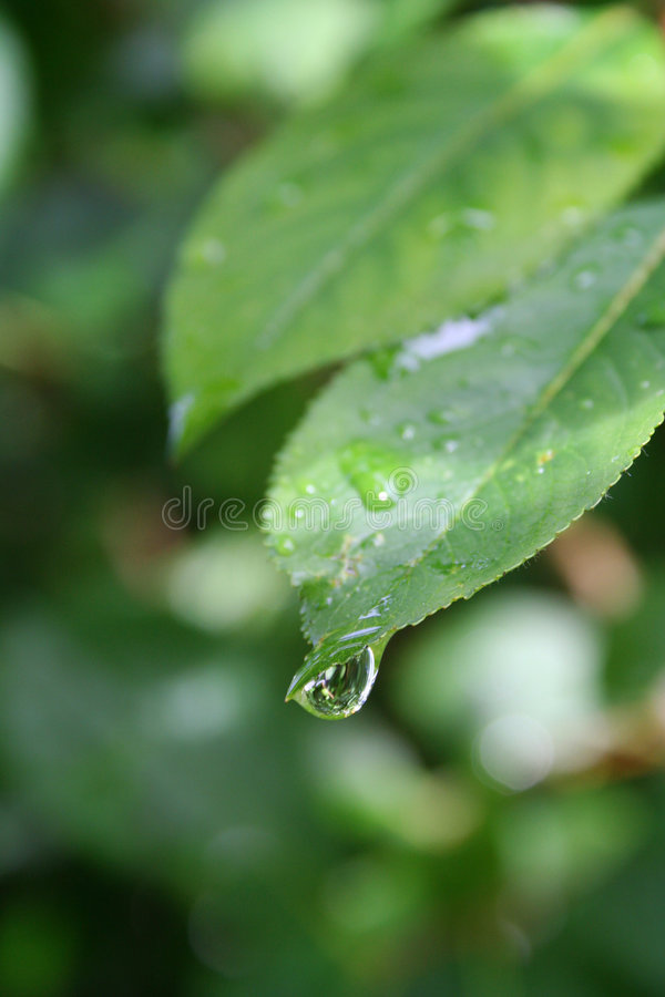 Download Raindrop stock photo. Image of plant, shimmer, small, forest - 196682