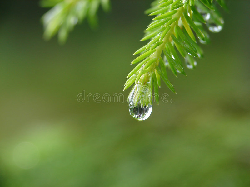 Raindrop. Reflection of forest in raindrop royalty free stock images