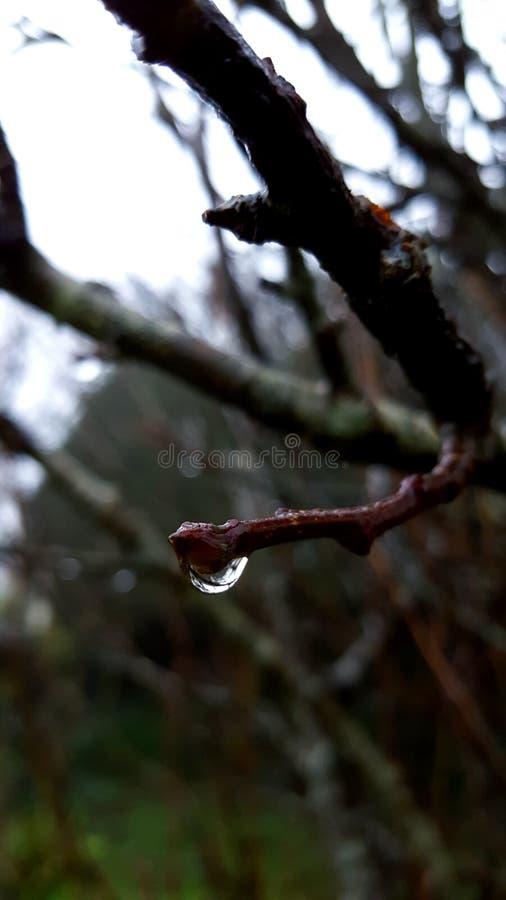 raindrop стоковые изображения rf