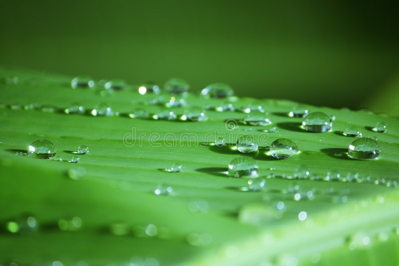 Raindrop on Banana Leaf. Behind rainy, must has raindrop, this's raindrop on banana leaf stock photos