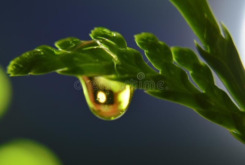 Raindrop in the grass. Gum Leaf with raindrop. Shallow depth of field, with blurred stock images