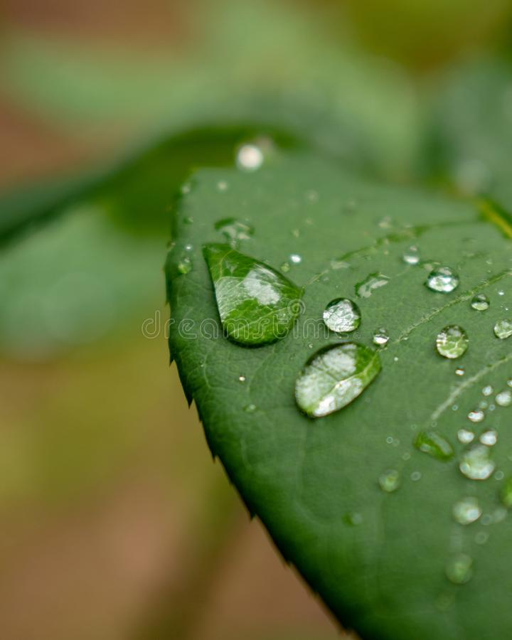 A raindrop on the leaf. Closeup photo of raindrop on the leaf after the rain stock image