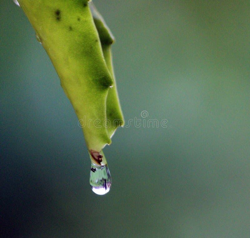Raindrop. Mumbai, India - June 10, 2015:Raindrop during rain at Madh Island in Mumbai, India, on Wednesday, June 10, 2017. Photo by Samson Tupdal royalty free stock photos