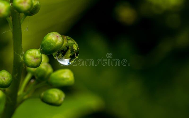 Download Raindrop Na Wiązce Winogrona Zdjęcie Stock - Obraz złożonej z tło, ogród: 41954544
