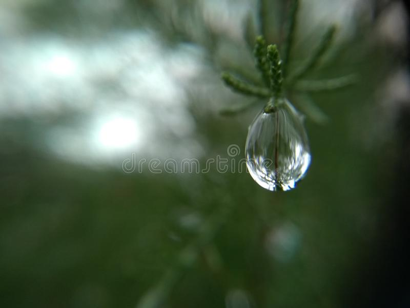 Raindrop. A raindrop on a pine leaf royalty free stock photography