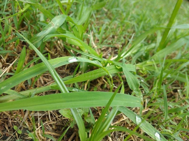 raindrop zdjęcie royalty free