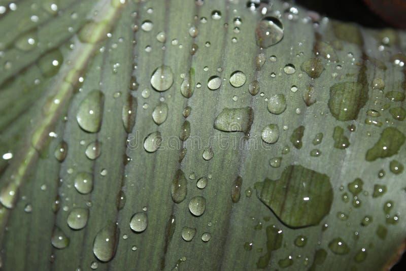 Raindrops на листьях стоковые фото
