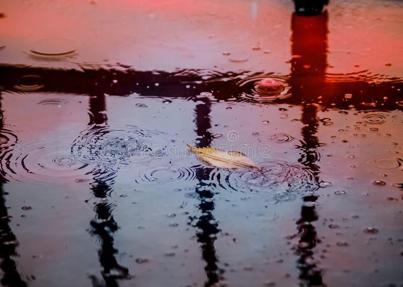 raindrops fotos de stock