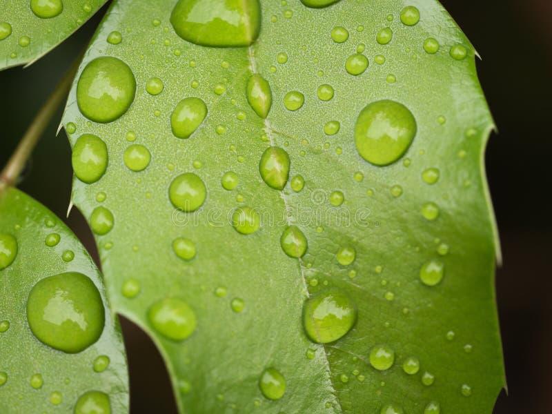 raindrops photo stock