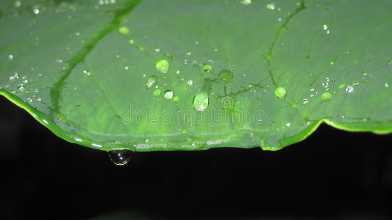 raindrops στοκ εικόνα με δικαίωμα ελεύθερης χρήσης