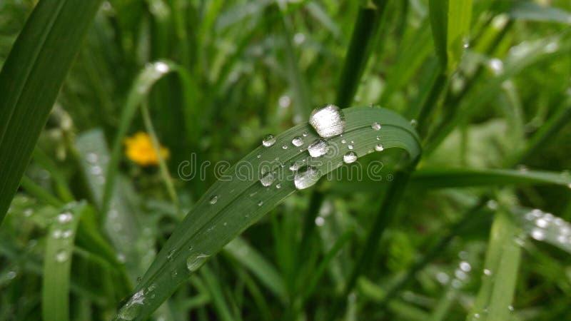 raindrops image libre de droits