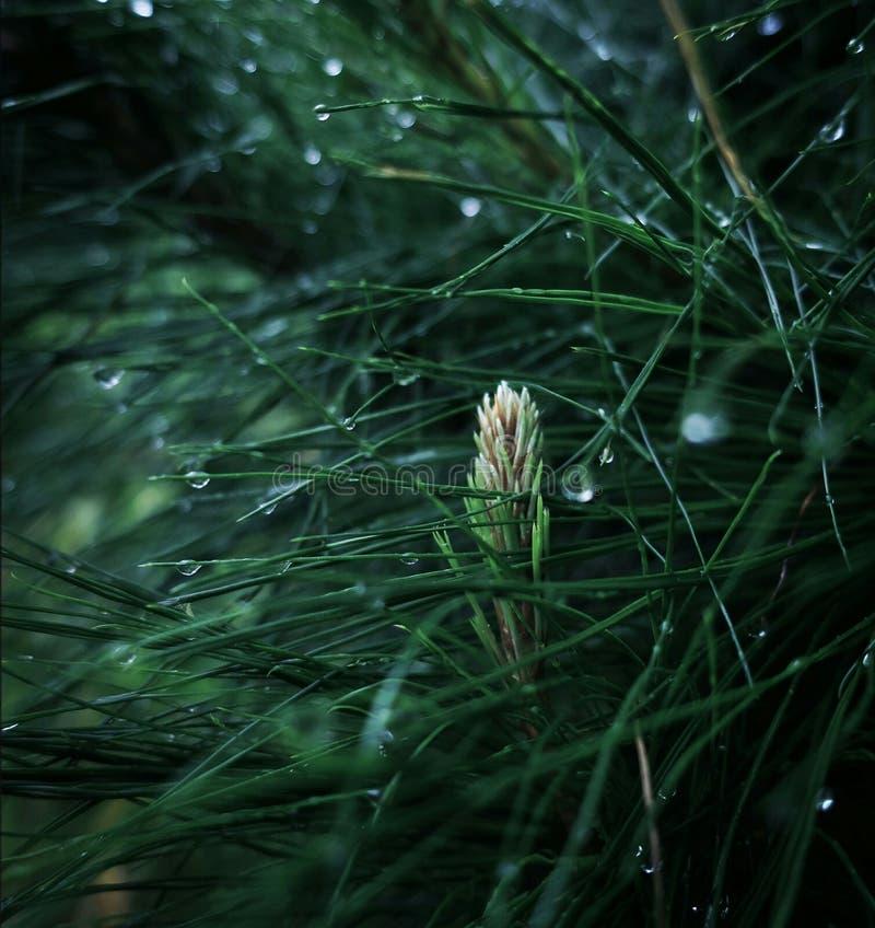 raindrops fotografia de stock royalty free