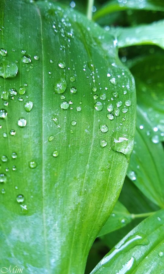 raindrops immagini stock