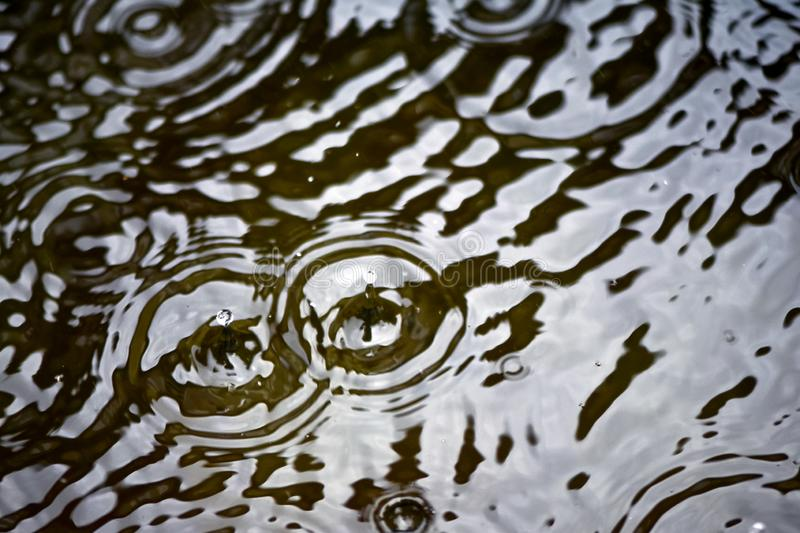 Raindrops and circles on the water, dripping on the surface royalty free stock images