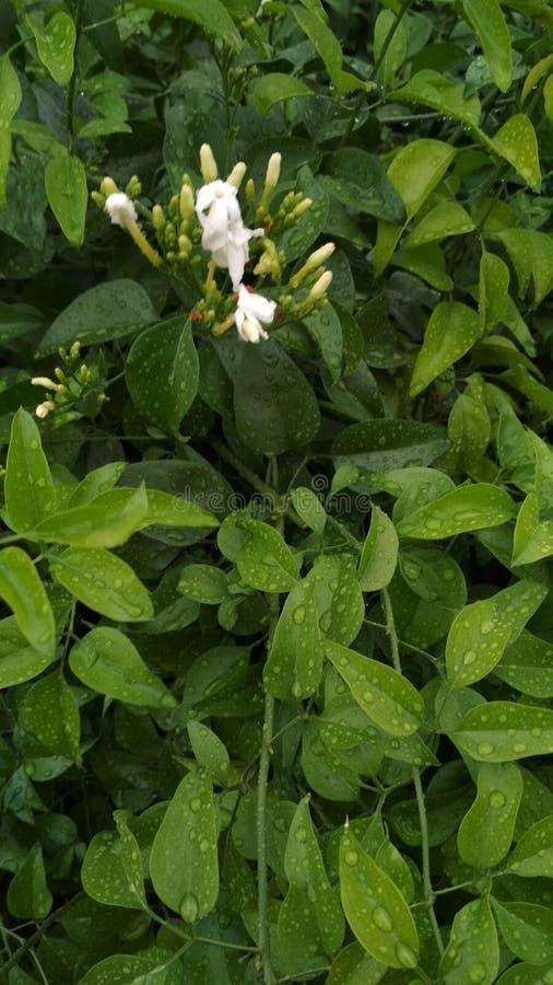 Raindrops dżdżyści, urlop natury roślina zdjęcia stock