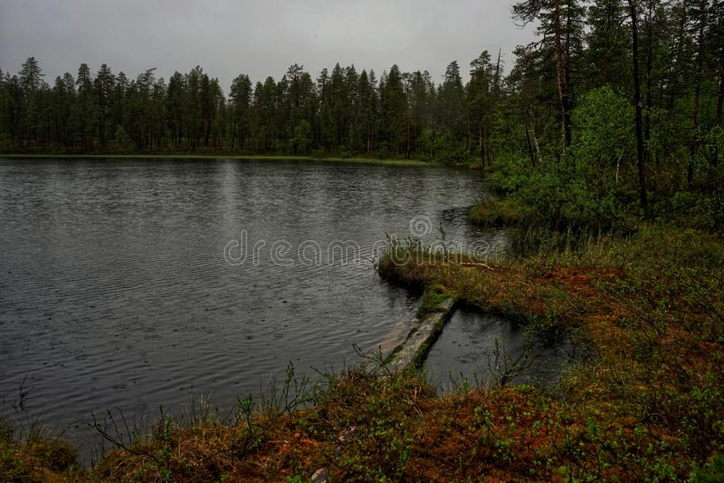 Raindrops falling into water. Lake, shore, colours, summer, rainy, gray, forest, trees, lapland, duckboards, green stock photography