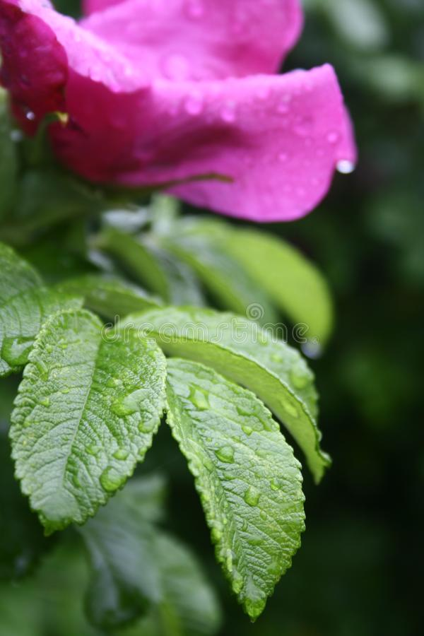 Download Raindrops on the flower stock image. Image of beauty, bright - 5617719