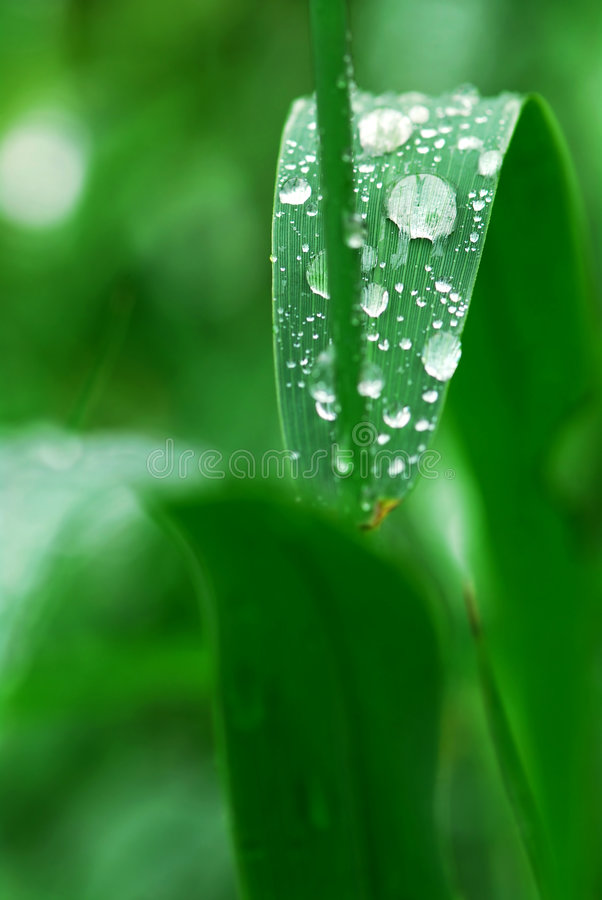 Download Raindrops on grass stock image. Image of details, droplets - 4073601