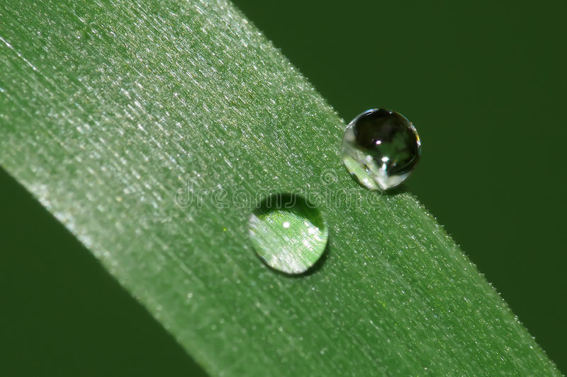 Download Raindrops on grass stock photo. Image of purity, closeup - 5494400