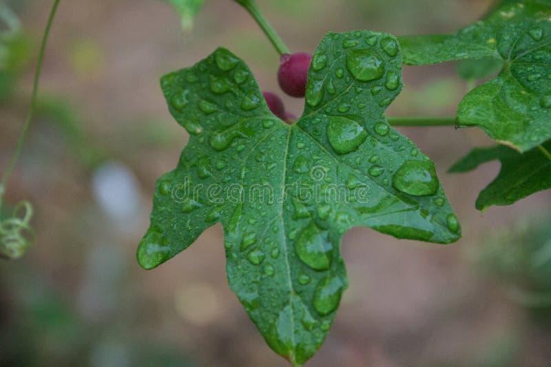Raindrops royalty free stock photos