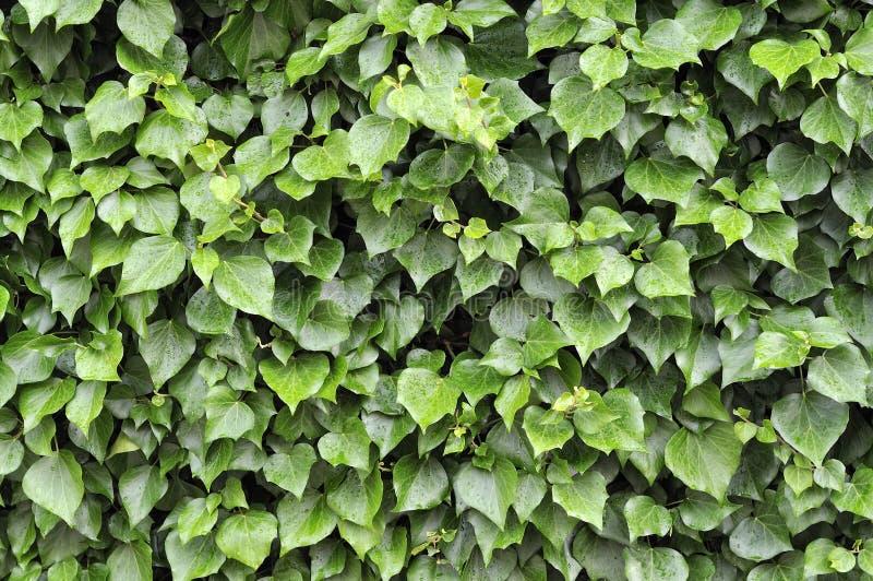 Download Raindrops on Leaf stock image. Image of life, leaf, lush - 14720727