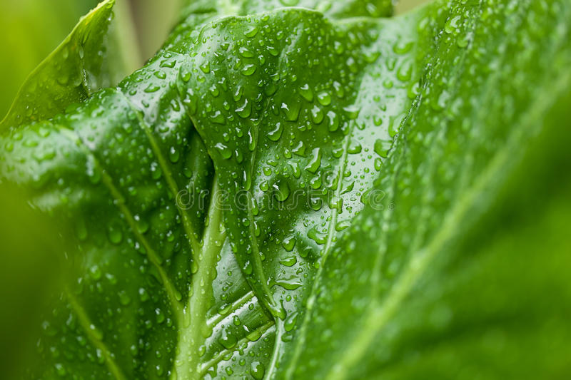 Raindrops on leaf royalty free stock images