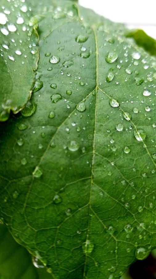 raindrops zdjęcia royalty free