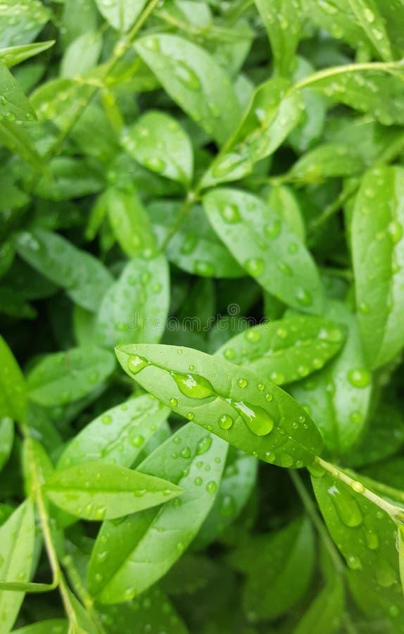 Raindrops na liściu zdjęcie stock