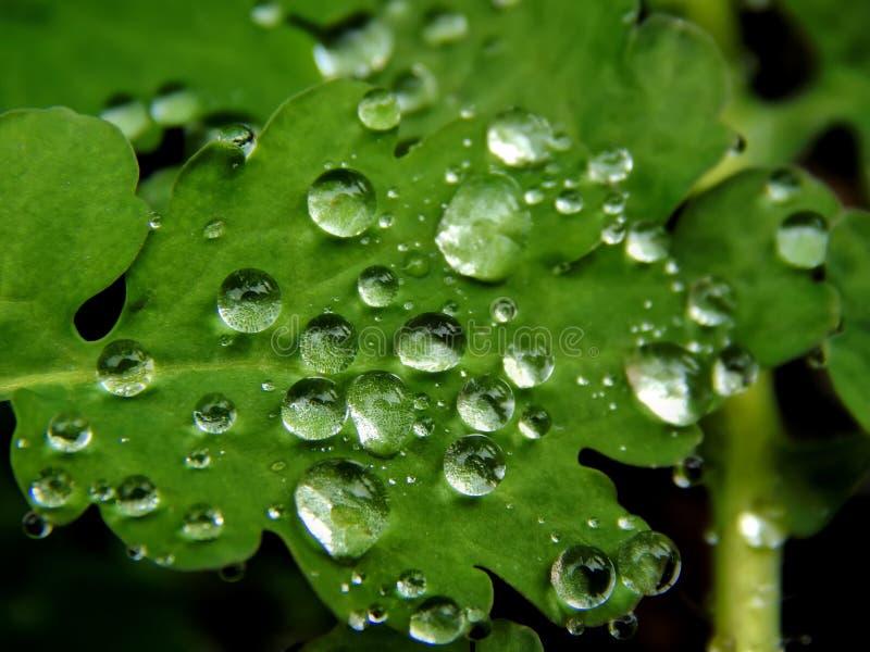 Raindrops na zielonym liściu roślina obraz royalty free