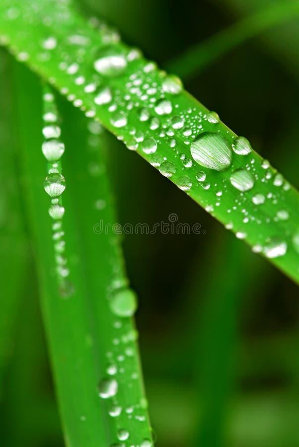 Free Raindrops On Grass Stock Photos - 3581153