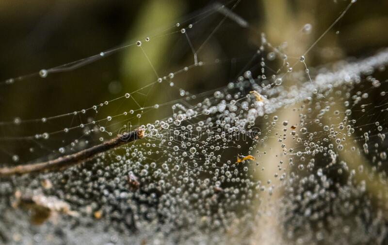 Raindrops in the spider web on a tree royalty free stock images