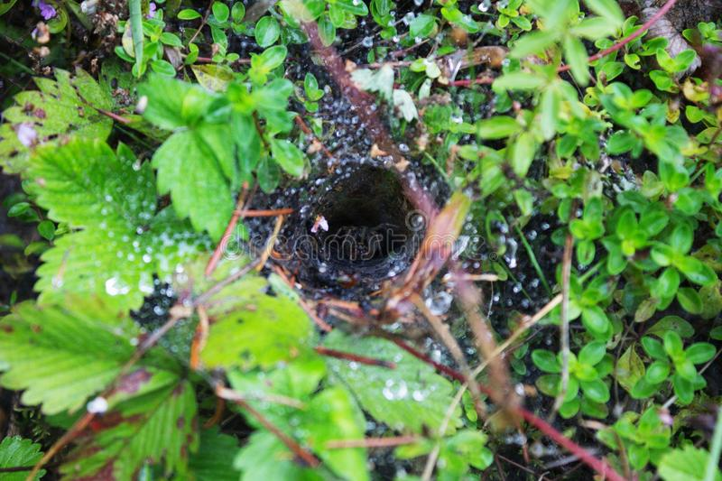 Raindrops on the web. Spider in the hole stock image