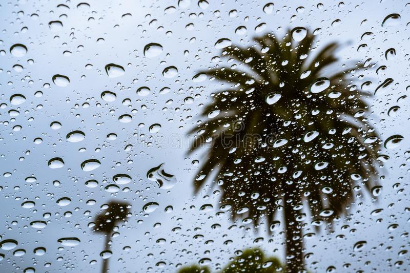 Raindrops on the window on a rainy day; palm tree visible in the background; California stock photography