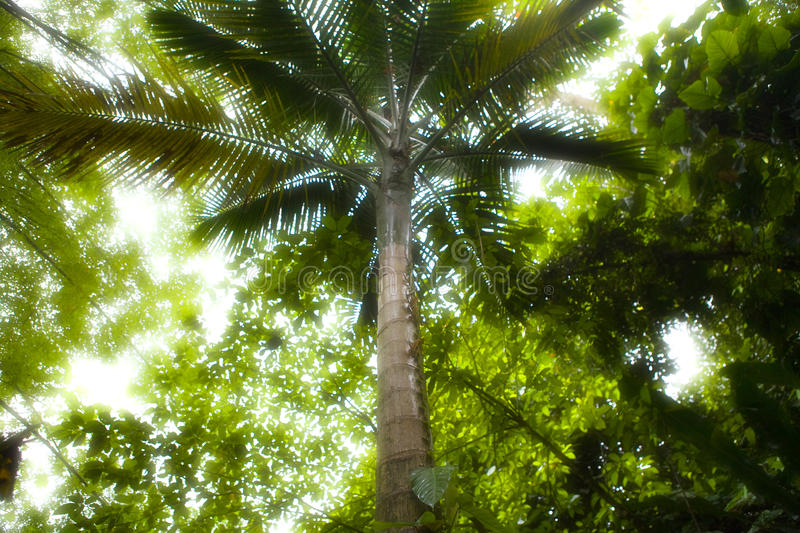 Rainforest royalty free stock photography