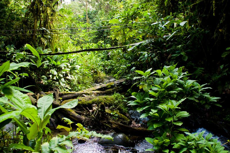 Download Rainforest stock photo. Image of natural, environment - 17357678