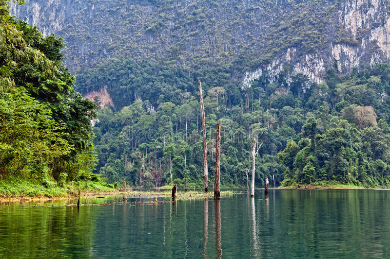 Download Rainforest stock photo. Image of haze, reflection, lake - 25088402