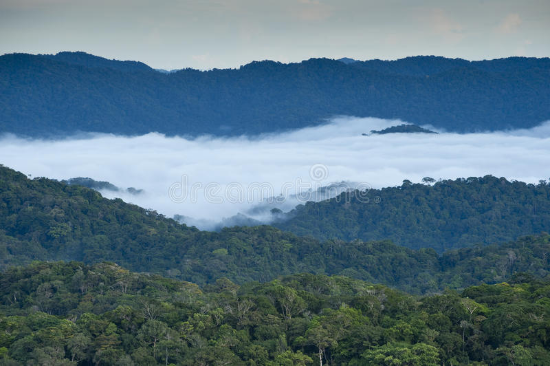 Download Rainforest stock photo. Image of high, panama, mist, tiger - 26639782