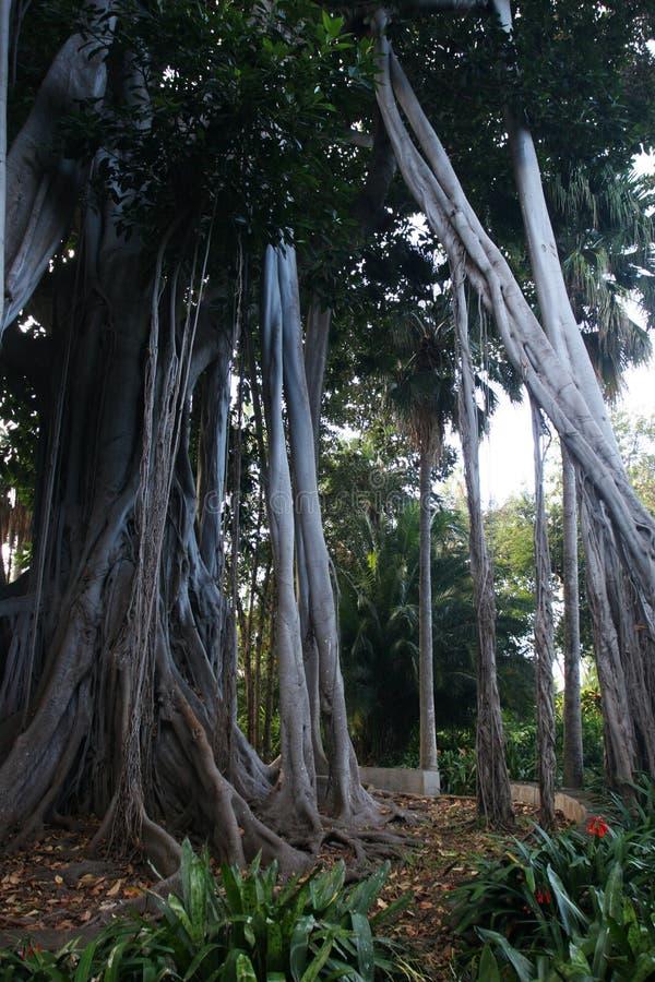 Download Rainforest stock photo. Image of trees, wild, tropics - 4557506