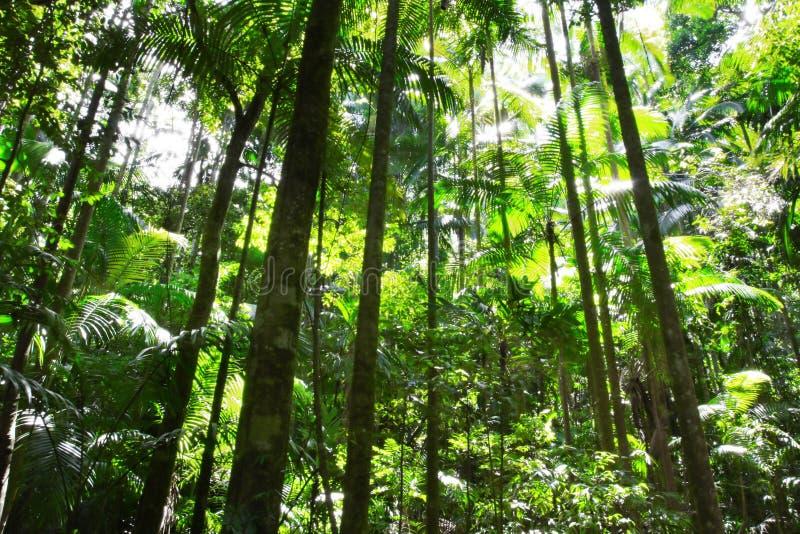 Download Rainforest stock image. Image of sunlight, australian - 7431111