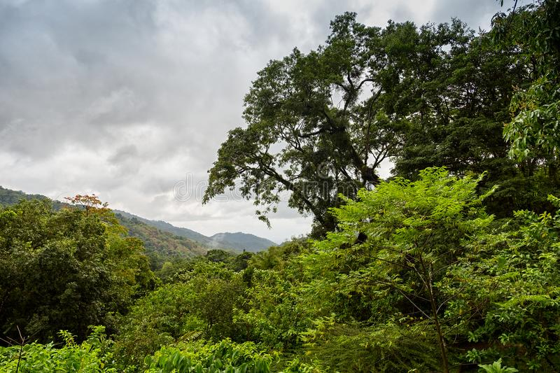 Rainforest in Aripo Valley - Trinidad & Tabago stock photos