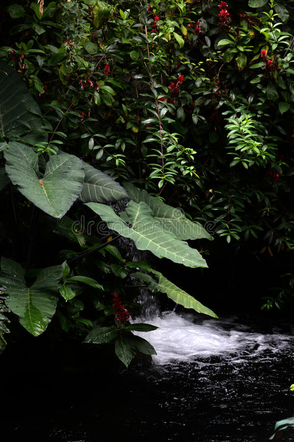 Rainforest atmosphere royalty free stock photo