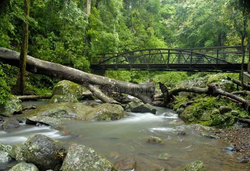Download Rainforest Bridge stock photo. Image of cascade, forest - 5701148