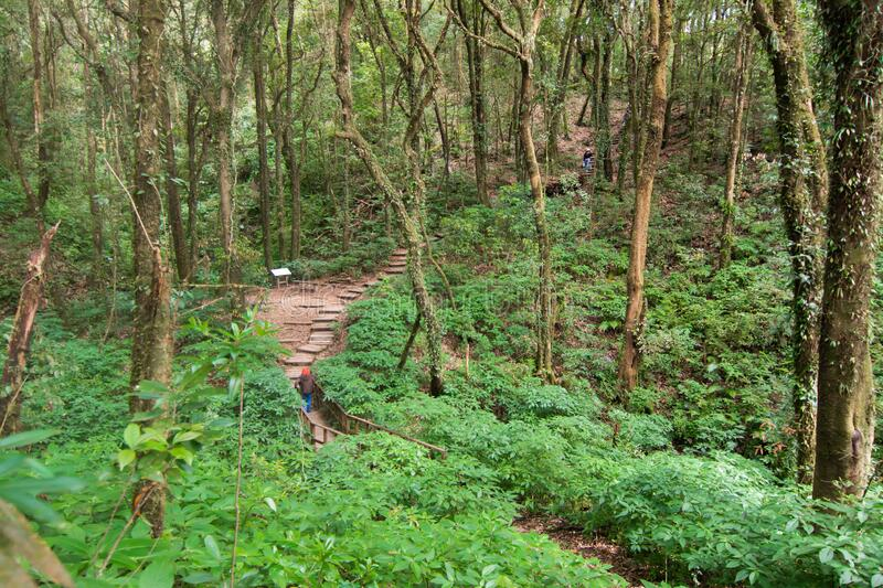 Rainforest in Doi Inthanon National Park, Thailand royaltyfria bilder