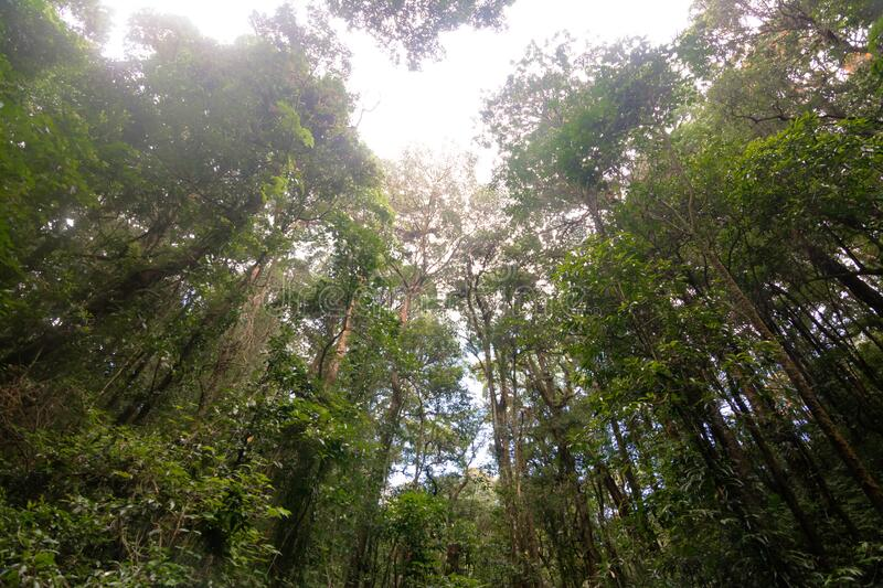 Rainforest in Doi Inthanon National Park, Thailand arkivfoto
