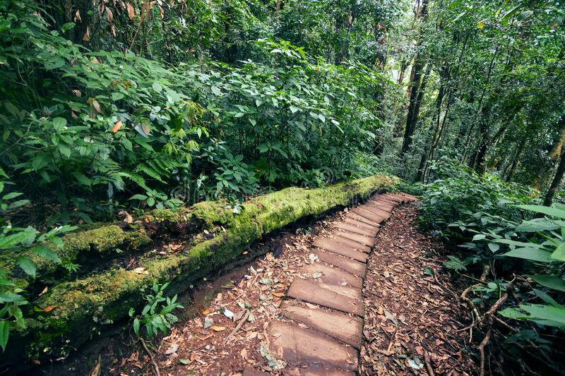 Rainforest in Doi Inthanon National Park, Thailand royaltyfri bild