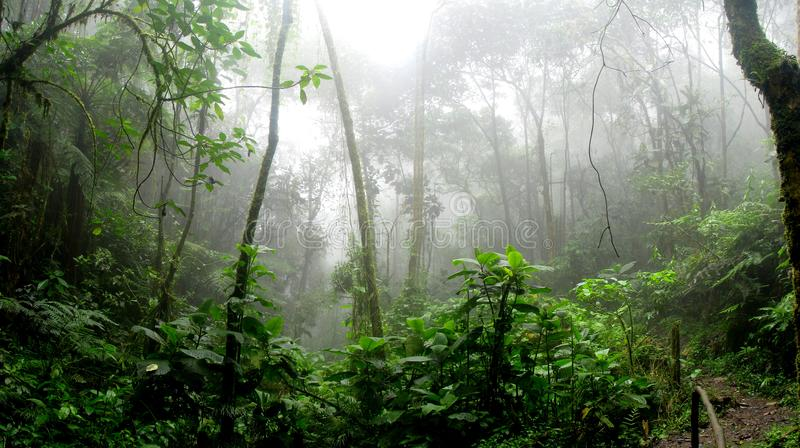 Rainforest during Foggy Day royalty free stock photo