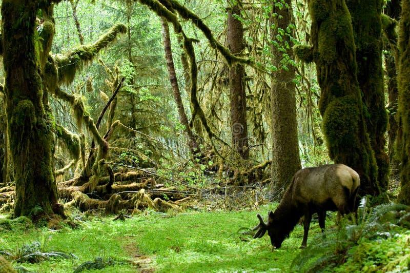 Rainforest habitat stock image