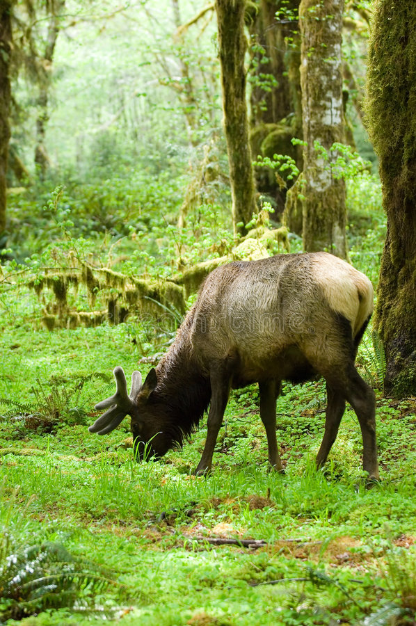 Rainforest habitat stock photo