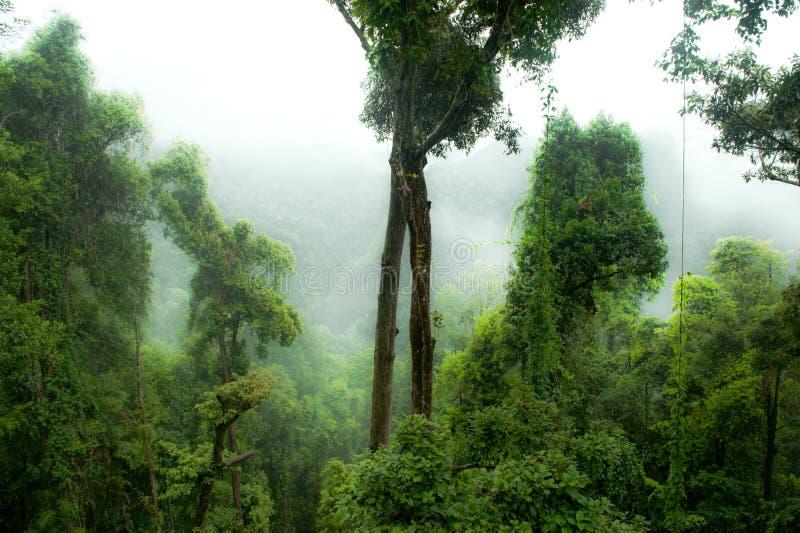 Rainforest i mist, djungel, Rainforest, Daintree skog nära Cairnes, grön djungel, Queensland, Australien arkivfoton