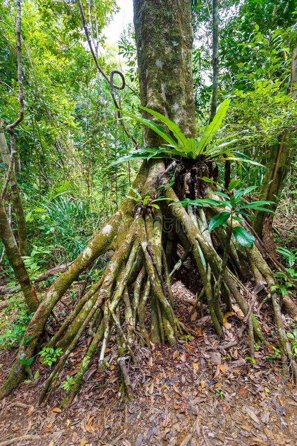 Free Rainforest In Masoala National Park, Madagascar Royalty Free Stock Photography - 191362197